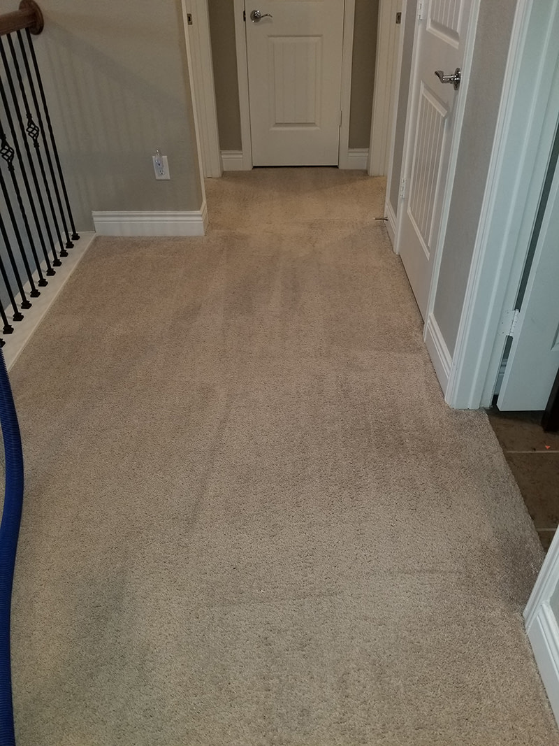 living room carpet cleaned