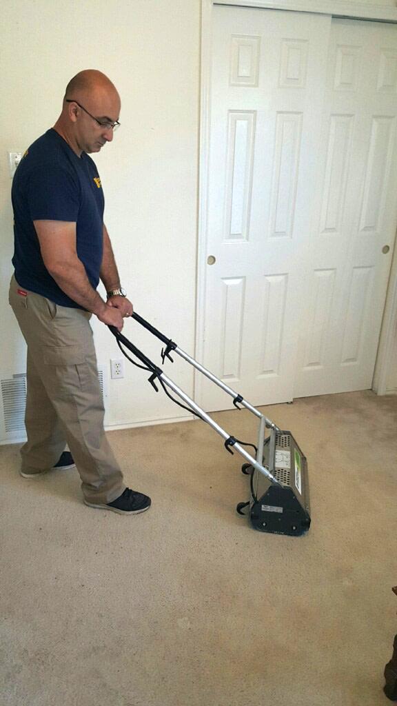 brushing the room carpet